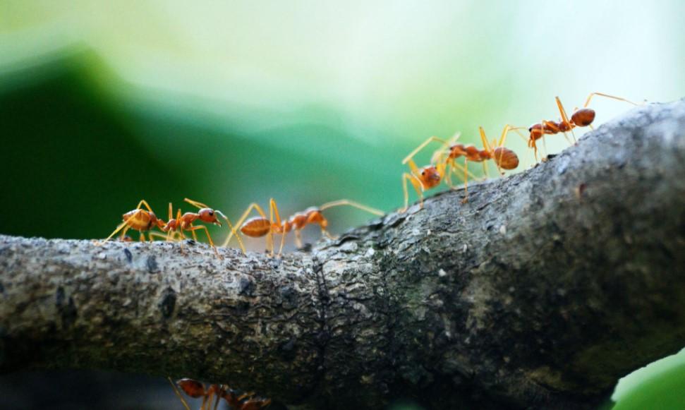 Manieren om zelf mieren uit huis en tuin te verjagen