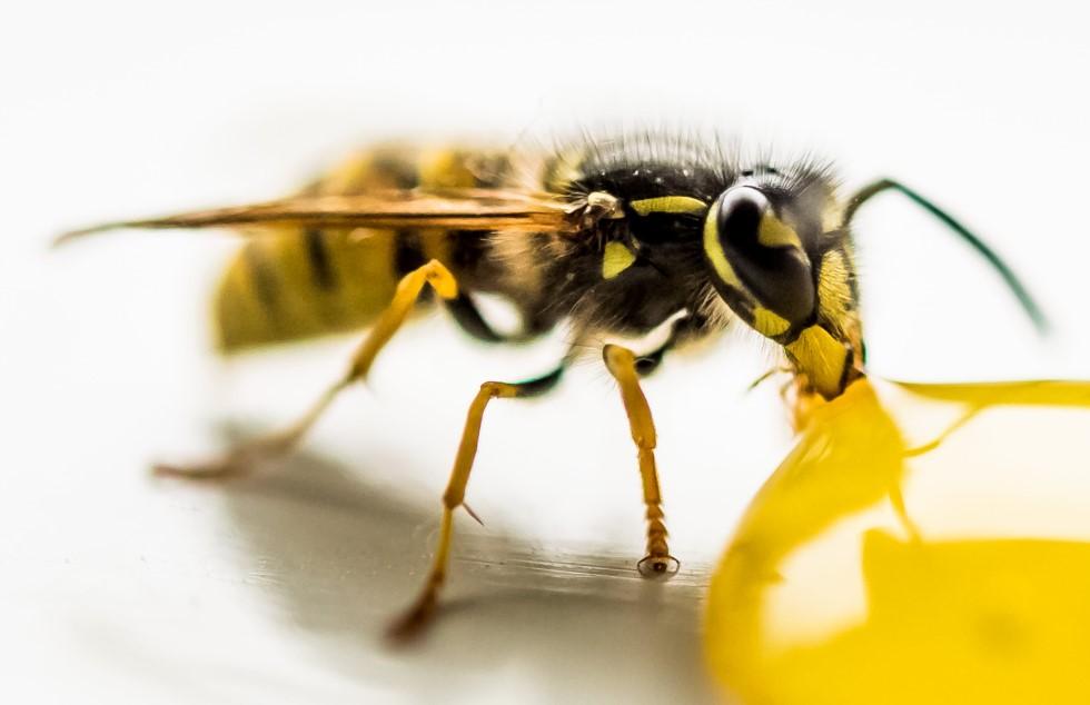 Zelf een wespennest verwijderen